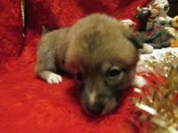 ALASKAN KLEE KAI We have ready for your home our loving