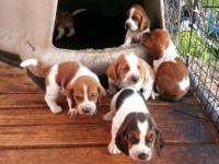 I have a litter of valuable basset hound children that