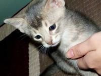 We are a small cattery in central west TX. We only have