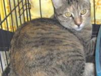 Abyssinian - Stevie Nicks - Large - Adult - Female -