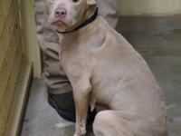 AC- Keela is a female Pit mix who has found herself in