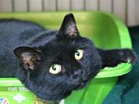 AC-Larry's story This sweet cat is available for