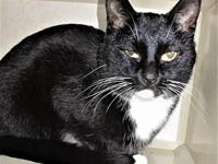 AC-Lulu's story This sweet cat is available for