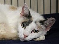 AC-Patches's story Please contact Karen M.