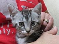 AC-Pixie's story This cute cat is available for