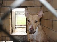 AC Trivet - Foster Home Needed's story This dog is at