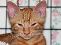 AC-Wash's story This sweet cat is available for