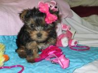 I have a little girl Maltese puppy for sale. She is up