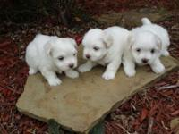 I have 1 male available have deposit on other 2 puppies