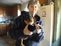 I HAVE 2 ACA GERMAN ROTTWEILER FEMALES READY FOR THEIR