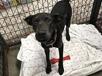My story Hi!Im Accalia. Im new to the shelter, so my