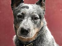 ACD Bowie's story Please contact Monica R Larner