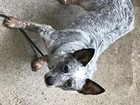 ACD Lulu's story Please contact Monica R Larner