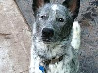 ACD Nickolai is Deaf's story Please contact Monica R
