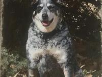 ACD Sr Carmine's story Please contact Monica R Larner