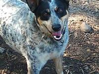 ACD Sr Spatter's story Please contact Monica R Larner