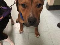 Ace's story !!! Located at ACCT Philly, 111 W Hunting