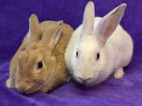 This adorable bunny pair is being offered for an