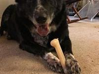 Ace's story Ace is a 12year old Border Collie whose