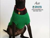 Ace's story Ace is all smiles, sorta, today! This is a