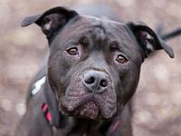 Ace's story Ace is a 3-year-old mixed-breed male whom
