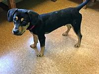 Ace's story ~~ Ace has been neutered and is ready for