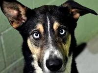 Ace's story Escape artist, chewed through his kennel,