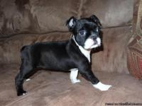 ACHC Bugg/Bugston puppies. We are now accepting