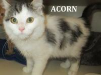 Acorn's story Acorn was in a foster home and the foster