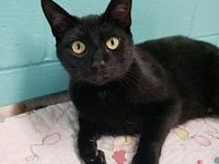 Acorn's story Acorn is a handsome 1 year old kitty. He