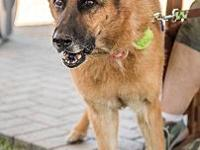 Ada's story Ada Is a Sweet Girl Who Loves People 8 year