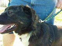 Adam's story Australian Shepherd mix Adam was born in