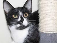 Adara was found in a garage with her mom and siblings.