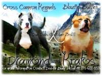 Here is our XL breeding... Due November 17th.. they are