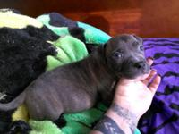 SC Kennels currently has four puppies available that