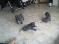 I have three 4 week old young puppies that will be