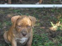 There are 3 males and 3 ladies available. 2 brindle