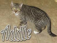 Addie's story Meet Addie! Addie is shy and would like a