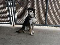 Addie's story Addie is a sweet girl originally from
