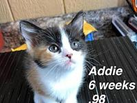 Addie's story Our pets are spayed/neutered and current