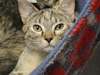 Addison's story Addison is a sweet spayed female