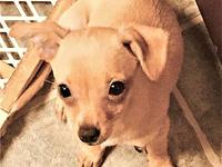 Addy's story Addy is an active, lovable, frisky 13 week