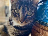 My story Sweet Adelaide is a petite and affectionate