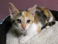 Adeline is a DSH Calico/tabby who's rescuer found her