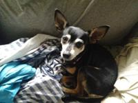 """Biskit"" is 10 yrs old, black and tan, home broken,"