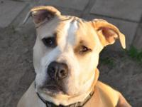 COURTESY LISTING - Hurley Hurley is a beautiful, loving