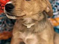 ADOPTED!!! Carson's story Carson is an 8 week old