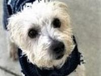 ADOPTED!!! Coco's story This adorable guy is Coco, a