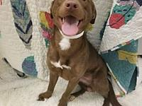 ADOPTED!!! Dante's story Dante is a 10 month old lab