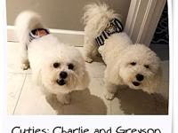 Adopted!! Greyson/Charlie - FL's story These two